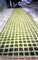GRASS AMERICANO RPM: #995889110