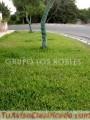 VENTA DE GRASS AMERICANO RPM: #995889110